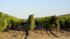 Terraced vineyards in Douro Valley Stock Footage