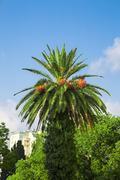 sunny palm tree - stock photo
