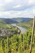 Mosel river with vineyard Stock Photos
