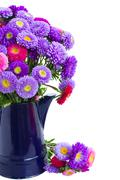 Bouquet of  aster flowers in blue pot Stock Photos