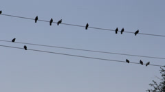 Birds pigeons are sitting on a wire in the winter Stock Footage