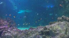 large public aquarium - stock footage
