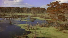 Tracking shot right to left of Swamp land with clouds reflecting off of water Stock Footage