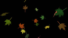 Falling Leaves - Autumn Maple Mix 3 - Loop - Alpha Channel - stock footage