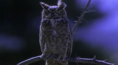 Night shot of Owl perched on tree limb Stock Footage