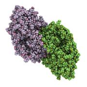 Alcohol dehydrogenase (adh) enzyme molecule, chemical structure. Stock Illustration