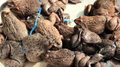Alive frogs for sale at market, Vietnam, Hochiminh city. Stock Footage