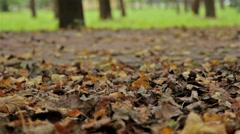 Fallen foliage, autumn. Close up, horizontal slider shot Stock Footage