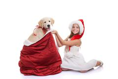 christmas holiday pet dog gift - stock photo