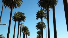 Palm trees in Beverly Hills, California Stock Footage