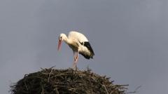 Stork on a nest Stock Footage