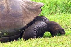 Tortoise Stock Footage