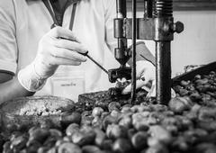 cashew nut cracking - stock photo