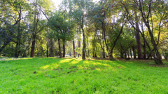 Sunny day in the park. Time Lapse. 4K - stock footage