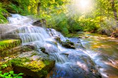 forest stream and waterfall - stock photo
