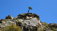 Lonely tree growing on the rock, the power of life Stock Footage