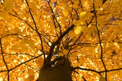 Autumn tree low angle view Stock Photos