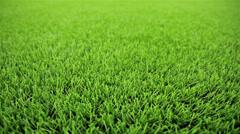 Grass field. Close-up, horizontal slider shot Stock Footage