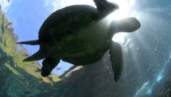Sea turtle underwater Galapagos Islands Stock Footage