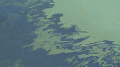Oil slick on the surface of the sea Stock Footage