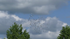 Batch of pigeons flying in circles around  - tracking shot Stock Footage