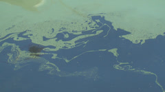 oil slick on the surface of the sea - stock footage