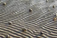 Stock Photo of stones scattered on a beach during a low tide on a late afternoon