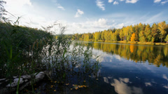 Forest lake  - stock footage