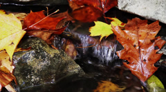 Autumn Trickle Loop - 1080aud Stock Footage