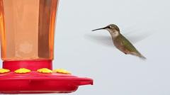 Super close up of hummingbird Stock Footage