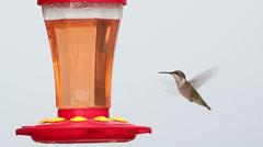 Hummingbird drinking from feeder Stock Footage