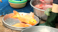 Alive freshwater fish, carps, for sale at market, Vietnam, Hochiminh city. Stock Footage
