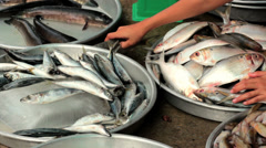 Fresh fish for sale at market, Vietnam, Hochiminh city. Stock Footage