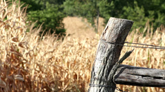 Close up of fence post with corn field in background Stock Footage