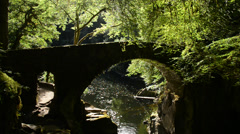 Bridge in green forest/woodland Stock Footage