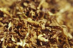 loose cuts of dried tobacco form golden background texture .shallow dof.. - stock photo