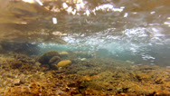 Stock Video Footage of River - Underwater