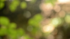 Out of focus tree leaves Stock Footage