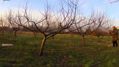 Man spraying orchards orchard with atomizer time lapse Stock Footage