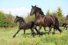 mare with foal running in autumn - stock photo