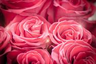 Stock Photo of bright red roses  background