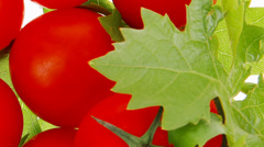 Raw fresh cherry tomatoes Stock Footage