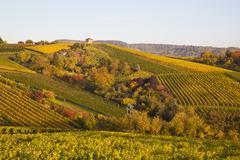 Germany, baden wuerttemberg, stuttgart, view of vineyard in autmn Stock Photos