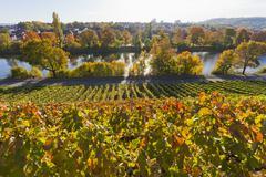 Germany, baden wuerttemberg, stuttgart, view of grape vineyard in autmn Stock Photos