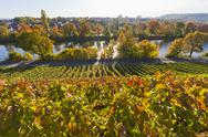 Stock Photo of germany, baden wuerttemberg, stuttgart, view of grape vineyard in autmn