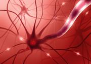 Stock Illustration of Nerve Cell