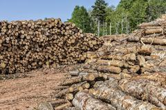 log stacks - stock photo
