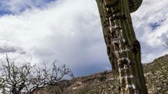 4K UHD NTSC De-faced graffiti saguaro cactus slider up shot time lapse Stock Footage