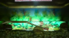 Locked-on shot of a snake in aquarium Stock Footage