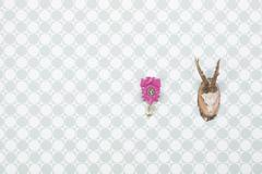 germany, freiburg, deer antler and pink cuckoo clock hanging on wall, close u - stock photo